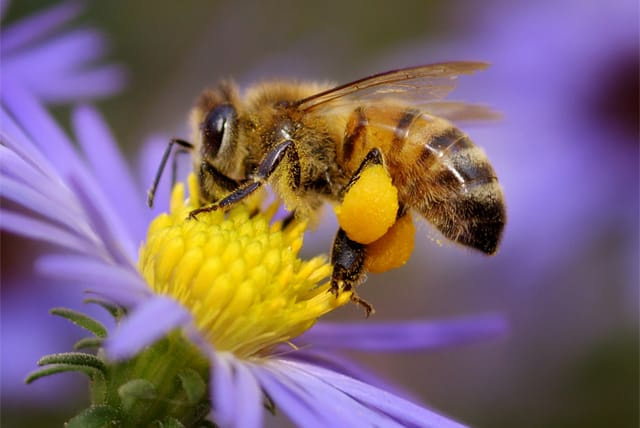 What Did Pollinators Ever Do For You?