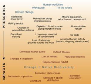 Biodiversity Chart