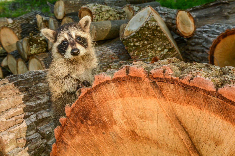 Habitat Degradation Animal