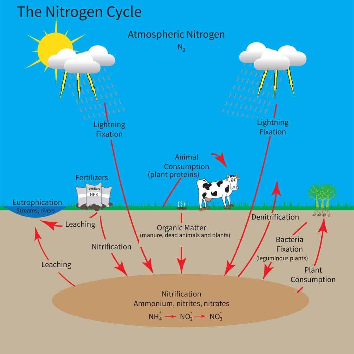 nitrogen-cycle-chart