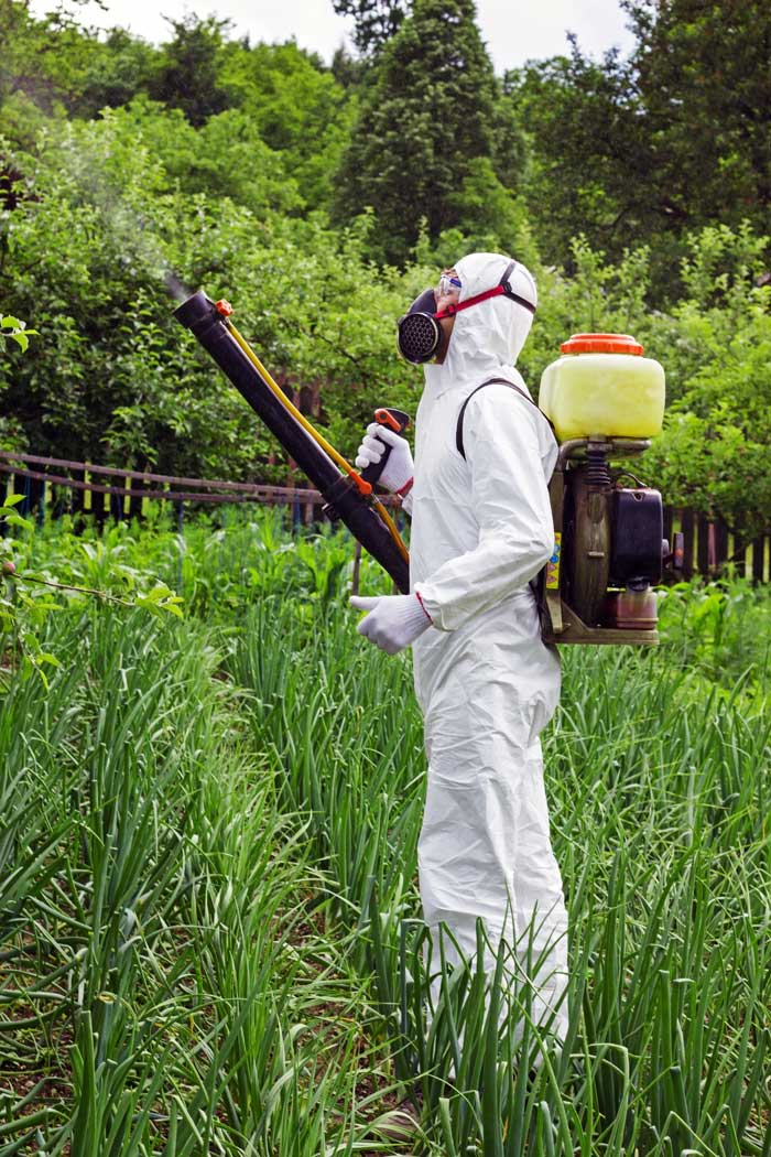 Spraying crops with pesticides