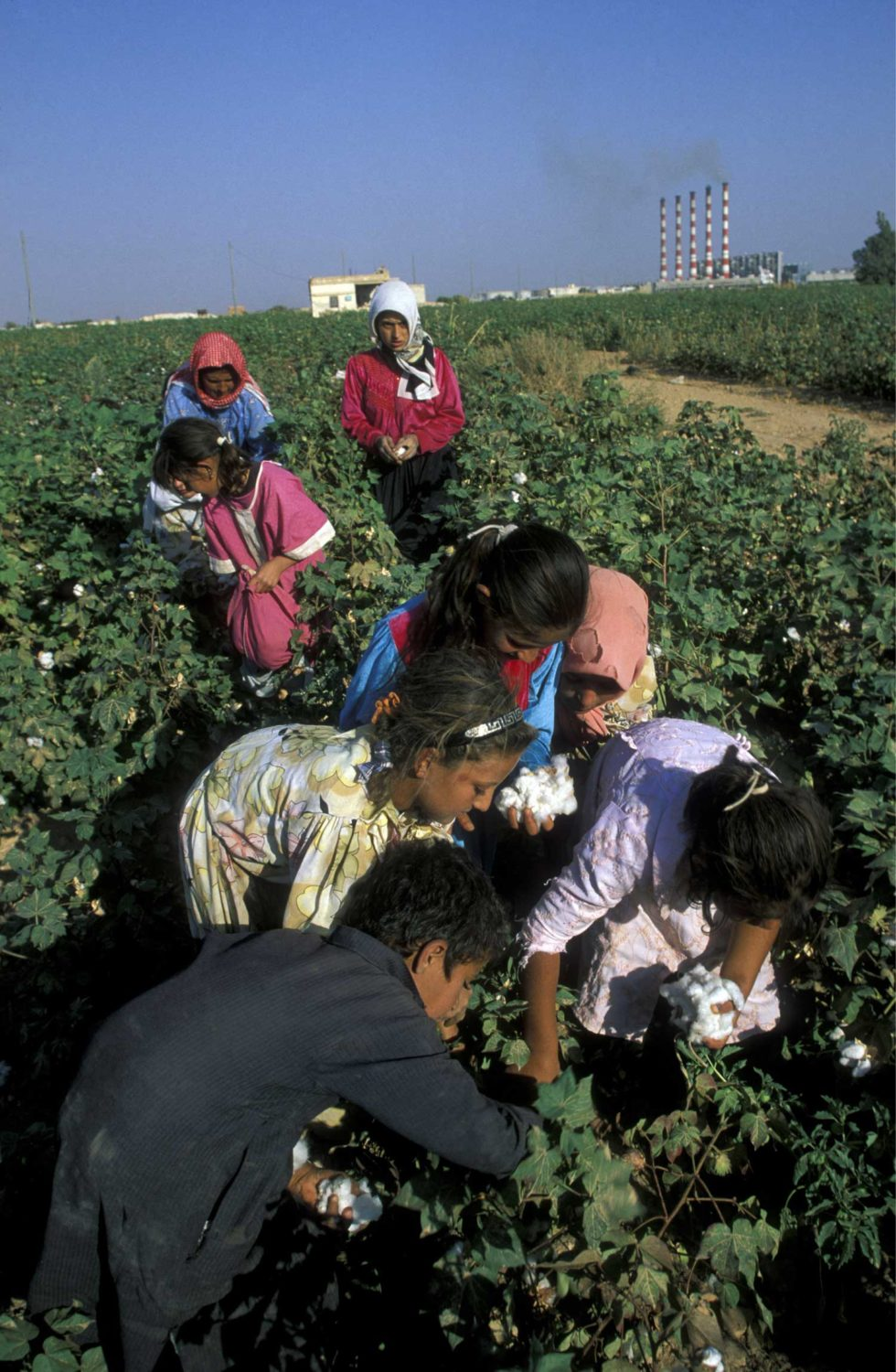 Children Laboring in the field