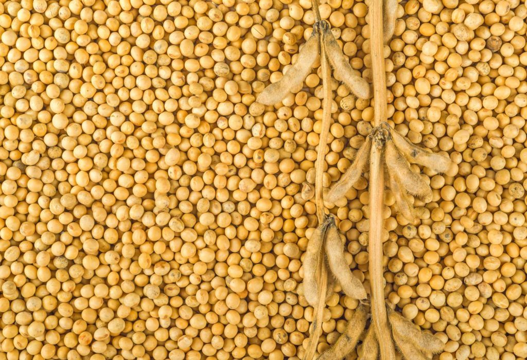#94 Soybean Production