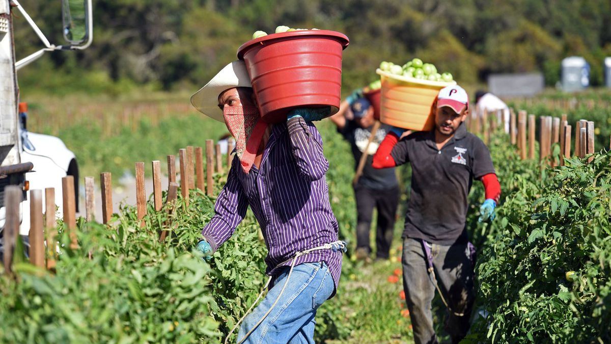 Protecting The Forgotten Farmworkers
